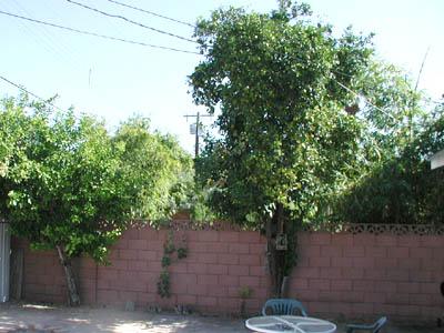 Backyard_trees Jpg